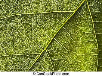 Closeup leaf - In botany, a leaf is an above-ground plant...