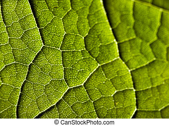 Leaf - In botany, a leaf is an above-ground plant organ...