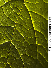 Leaf background - In botany, a leaf is an above-ground plant...