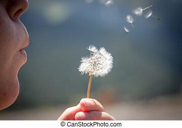 Blowing Dandelions - Blowing seeds dandelion seeds in the...