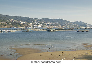 Vigo Ria. Over the sea, some bateas (raft culture of...