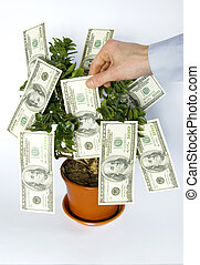 money tree - hands blows off dollars from the tree of money...