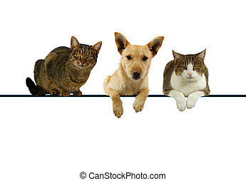 Dog and cats over a blank banner - Dog flanked by two cats...