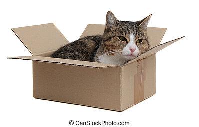 箱子, 貓,  Snoopy, 移動