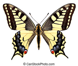 Isolated swallowtail butterfly - Swallowtail butterfly...