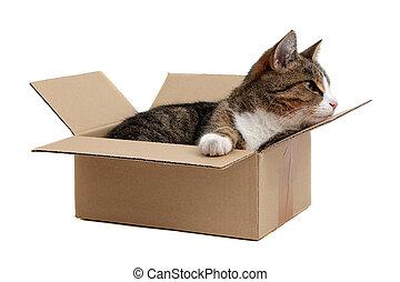 箱子, 很少,  Snoopy, 貓