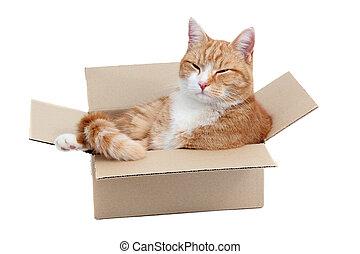 箱子, 2UTE, 放松, 雄貓