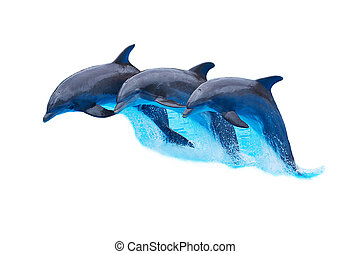 Leaping Bottlenose Dolphins isolated on white - Three...