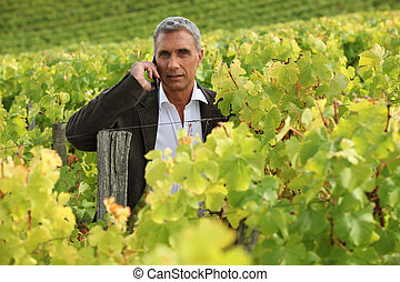 Man on a phone in a vineyard