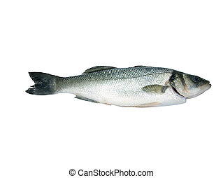 Sea-Bass Isolated(Dicentr - Sea-Bass isolated over white...