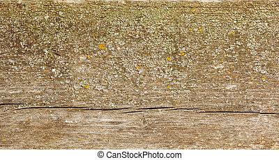 Natural fir wood texture