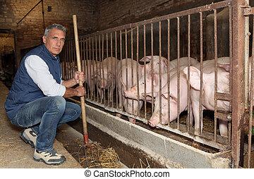 agricultor, alimentação, porcos