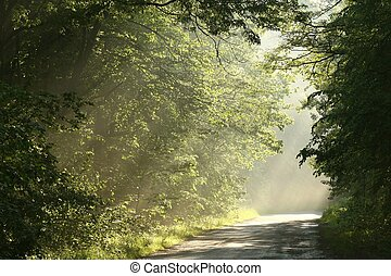 Spring forest at dusk - Spring deciduous forest surrounded...