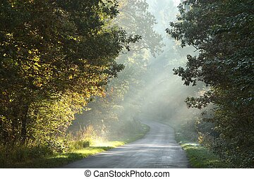 otoño,  rural, bosque, camino