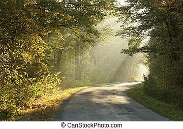 Rural road through the autumn woods - Country road running...