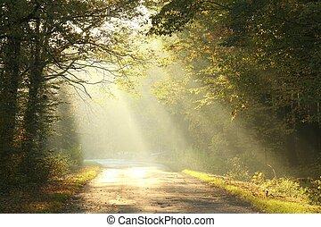 otoño, bosque, mañana