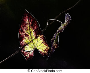 leaves and light,leaf - Leaves with light,and a darkened...