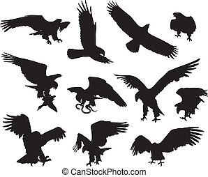 Eagles - Hunting eagle detailed vector silhouettes set