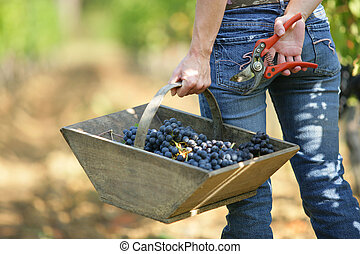 woman carrying a basket of grapes