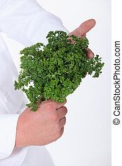 Chef holding a bunch of fresh parsley