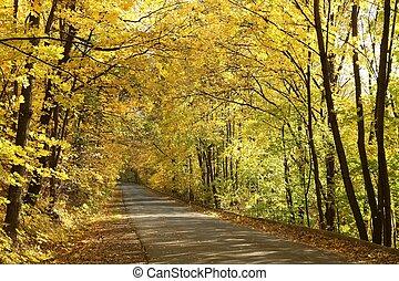 otoño, país, camino, mañana