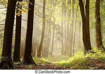 Misty trail in an enchanted forest - Trail leading through a...