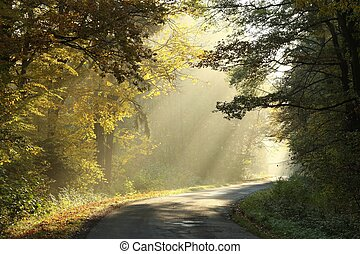 Autumn forest in misty morning - Country road running...