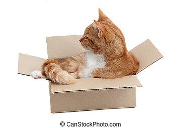 箱子,  Snoopy, 雄貓, 移動