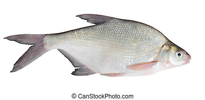 bream isolated over white