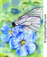 Black-veined White (Aporia crataegi) on flower.