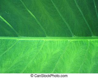 foglia,  closeup, verde