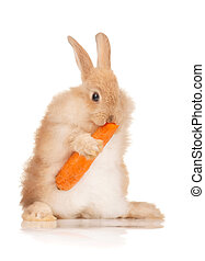 Cute rabbit - Portrait of adorable rabbit with carrot over...