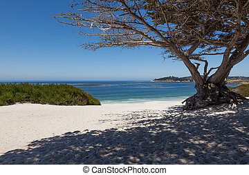 Carmel beach in Carmel, California - USA
