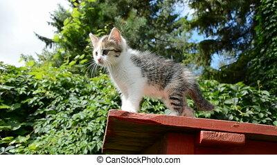 kitten on table in the garden