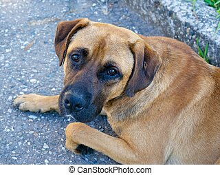 Trusting glance - Trusting eyes of street dog can not leave...