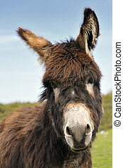 Curious donkey - The photo of the donkey very curious about...