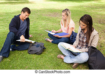 Three students studying together in a park