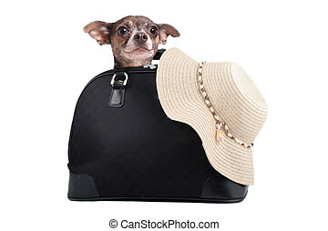 Chihuahua weekend getaway bag - A small chihuahua dog inside...