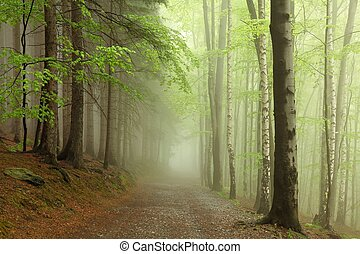 Forest trail in the fog - Forest trail among the beech trees...