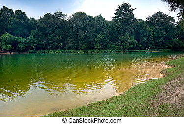 Part of reservoir in MacRitchie park, Singapore