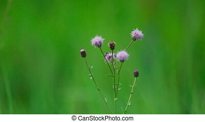Wildflowers - Wildflowers, shallow depth of focus