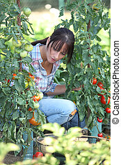 Woman with tomato plants
