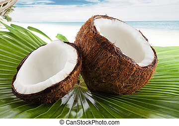 coconut - Close up view of nice fresh coconut in tropical...