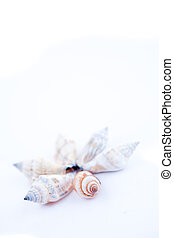 Shellfishes forming a circle against a white background