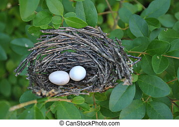 bird nest with eggs - abandoned bird nest with 2 eggs...