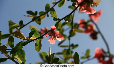 Brier pink flowers closely at sky background