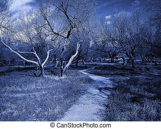 Dead Grove-Dirt Trail - Blue duo-tone image of a dirt trail...