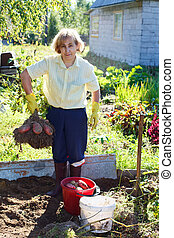 Mature woman in own garden holding bunch of fresh picking potato