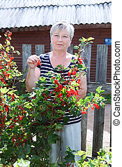 Senior woman in own garden standing near bushes of red currants with berries