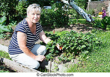 Senior adult woman holding red strawberries on brunch